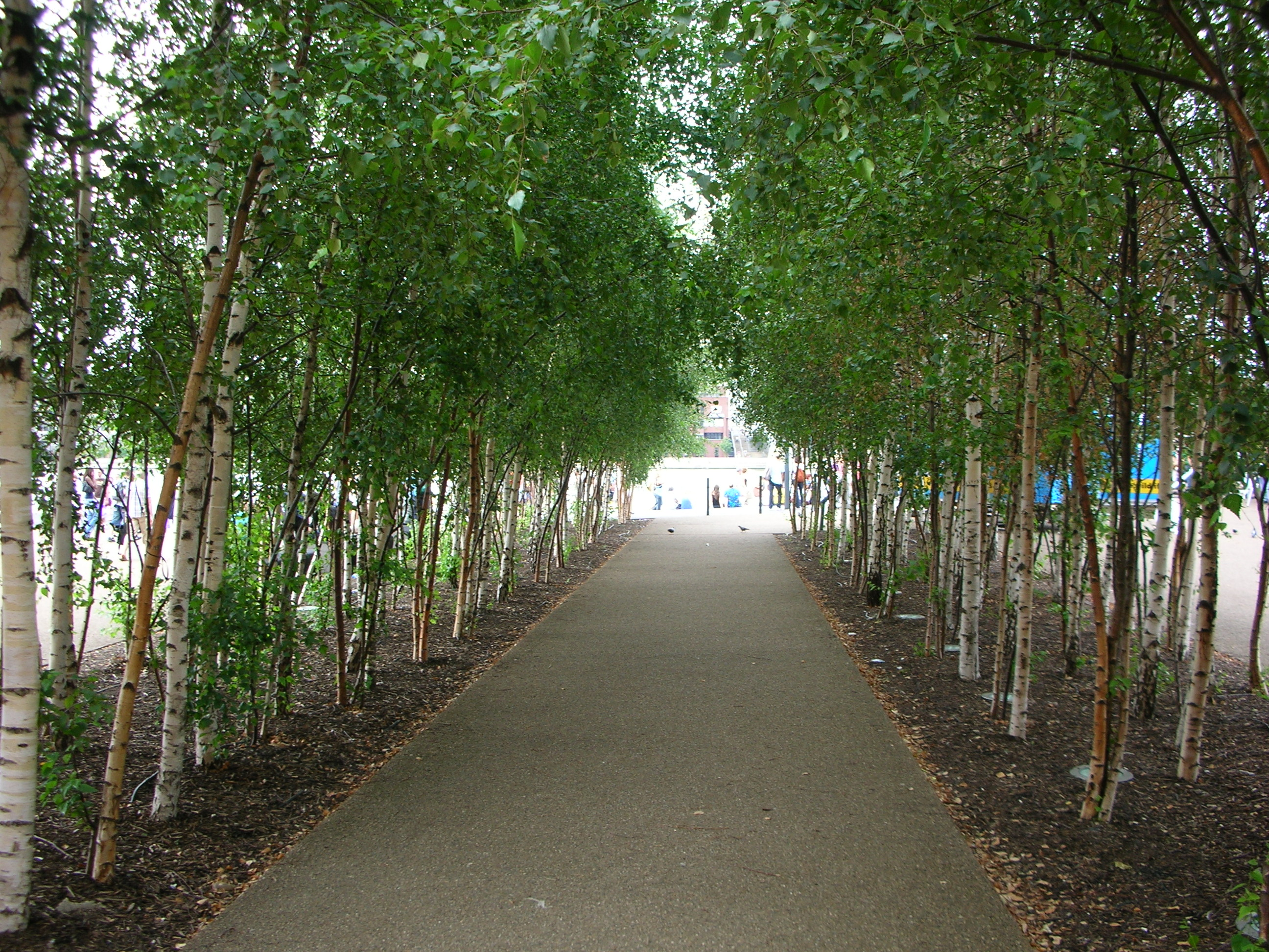 Trees Help Improve The Quality Of Life In Our Town Cities