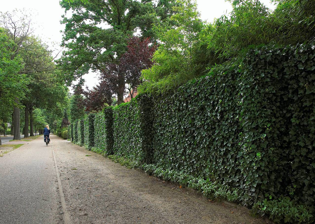 Oxford University Study Finds Ivy Can Protect Walls