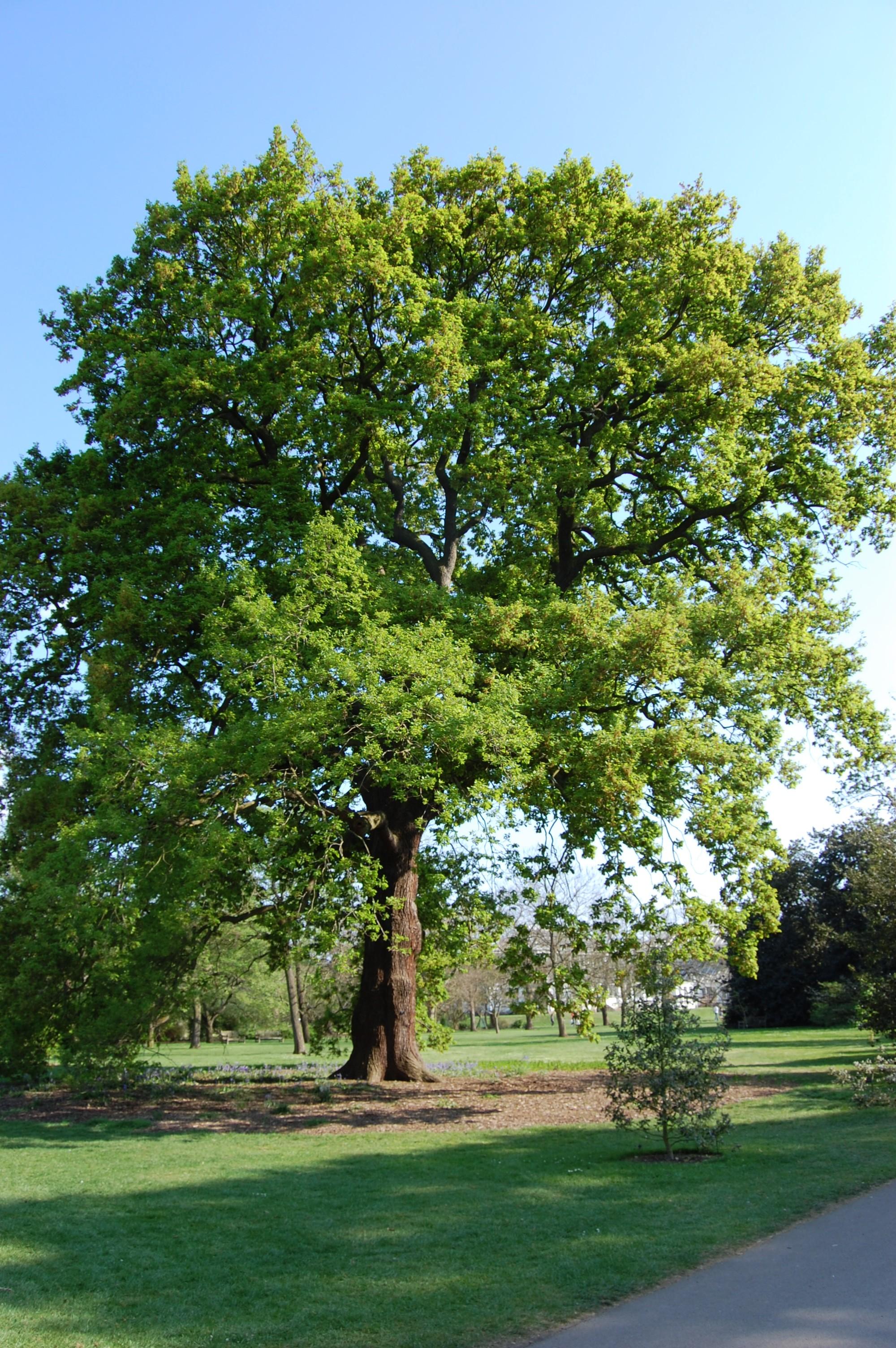 Welsh oak landscape architects pages