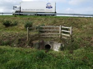 Badger tunnel under road Badger (Image © Amtmann)