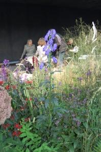Aconitum wilsonii 'Barkers' (17/09/2011, London)
