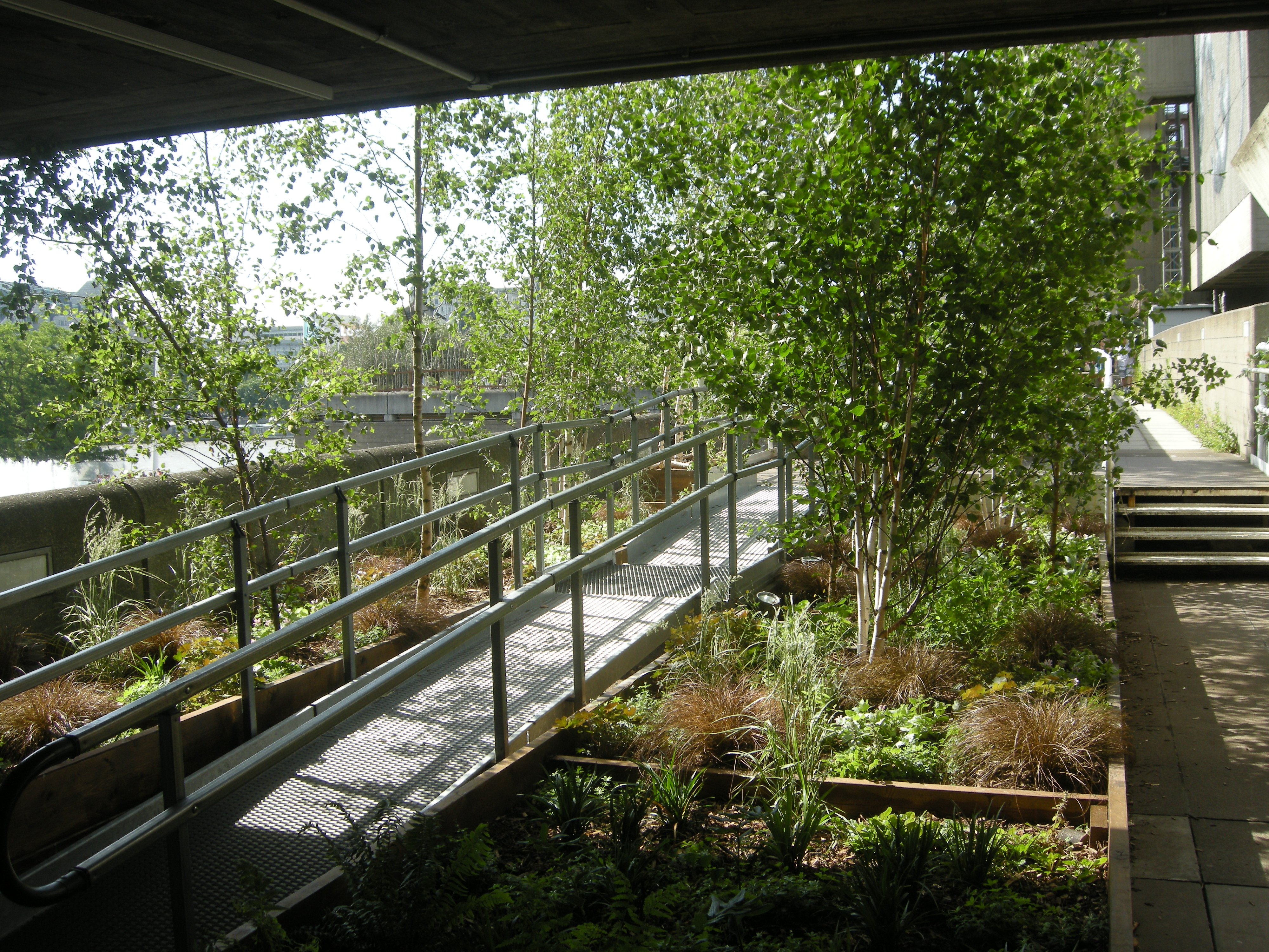 Queen Elizabeth Hall Woodland Roof Garden Landscape